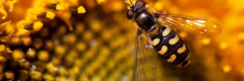 Arıların Doğadaki Görevi Nedir?