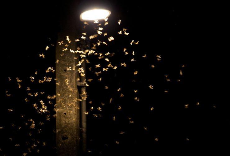 Böcekler Neden Işığa Doğru Uçar?
