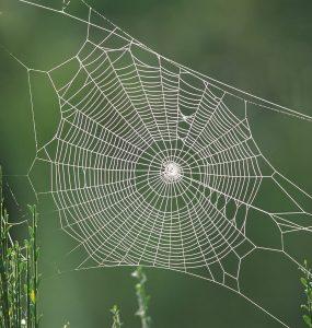 Örümcekler Ağlarını Nasıl Örer?