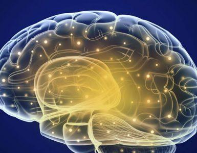 Hafıza Nasıl Çalışır?