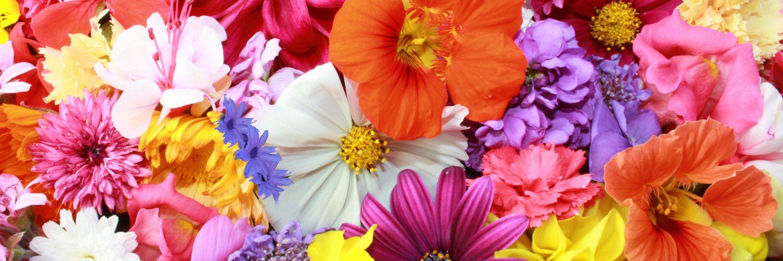 Hangi Çiçek Ne Anlama Geliyor?