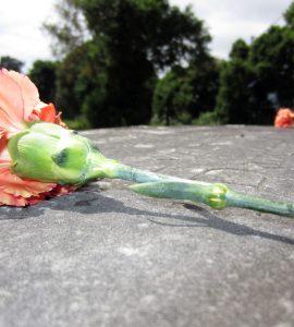 Mezara Niçin Çiçek Konulur?
