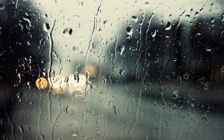 Sinek Yağmurda Neden Düşmez?