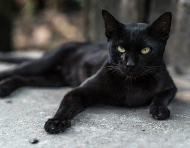 Kara Kedi Geçmesinin Neden Uğursuzluk Getirdiğine İnanılır?