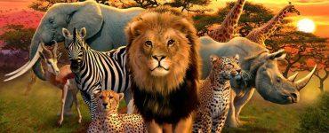 Afrika'daki En Tehlikeli Hayvan Hangisidir?