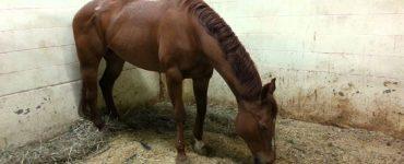 Atlar Nasıl Ayakta Uyuyabiliyor?