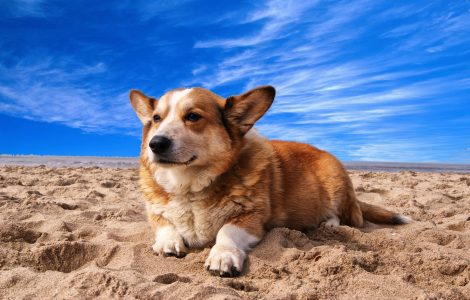 Bir Köpeğin Yaşı Niçin Yedi İnsan Yaşına Eşittir?