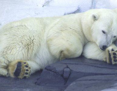 Hayvanlar Niçin Kış Uykusuna Yatarlar?