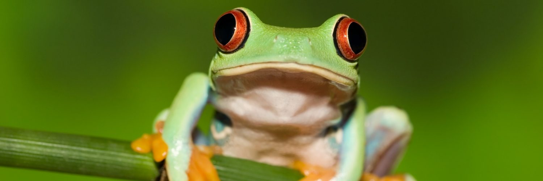 Kurbağalar Hakkında Az Bilinenen 12 İlginç Bilgi