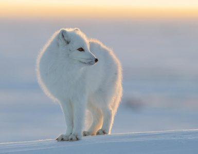 Kutuplarda Hayvanlar Nasıl Yaşayabiliyorlar?