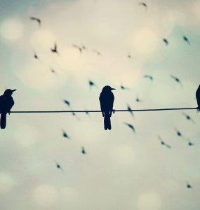 Tellere Konan Kuşlar Niçin Çarpılmıyor?
