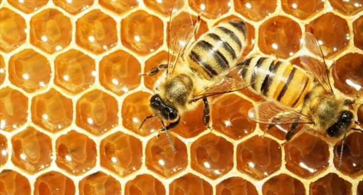 Arıların Bal Petekleri Niçin Altıgendir?