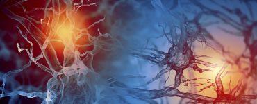 Beyin Hücrelerimiz Sürekli Ölüyorlar mı?