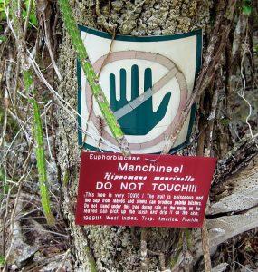 Dünyanın En Tehlikeli Ağacı Hangisidir?