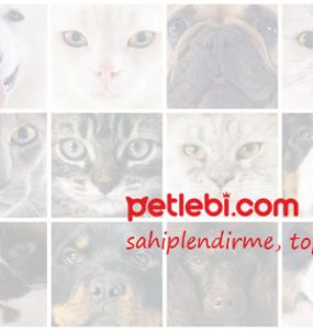 Kedi Maması Çeşitleri Arasından Kedilere Özel Seçimler!