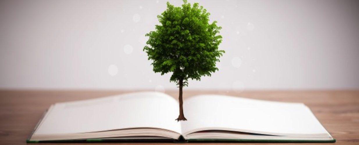 Bir ağaçtan kaç tane dosya kâğıdı çıkar?