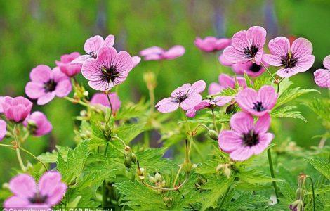 Bitkiler Çiçeklenme Zamanlarını Nasıl Biliyor?