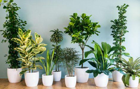 Düzensiz Işıklandırma Bitkileri Nasıl Etkiliyor?