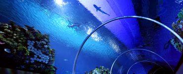 Danimarka'nın Eşsiz Akvaryumu: Blue Planet