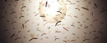 Böcekler Işığı Neden Çekici Bulur?