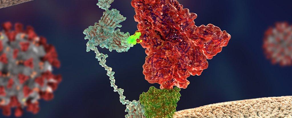 Koronavirüsü Bu Kadar Bulaşıcı Yapan İkinci Bir 'Anahtar' Keşfedildi