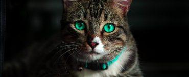 Kediler Hakkında Bilinmeyenler